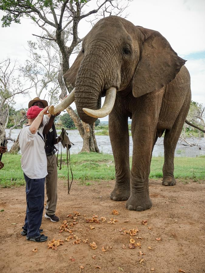 Africa, the elephant keeper, helping Tony touch the elephant's tusk.
