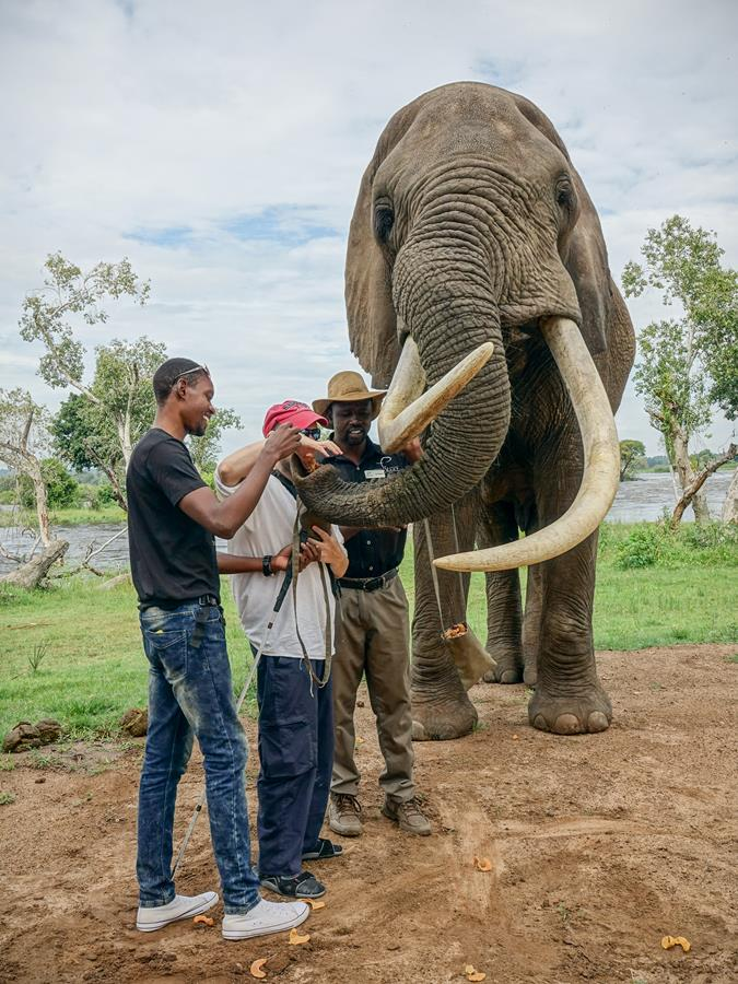 Good view of Tony and Ethan putting more food directly into the elephant's raised trunk.