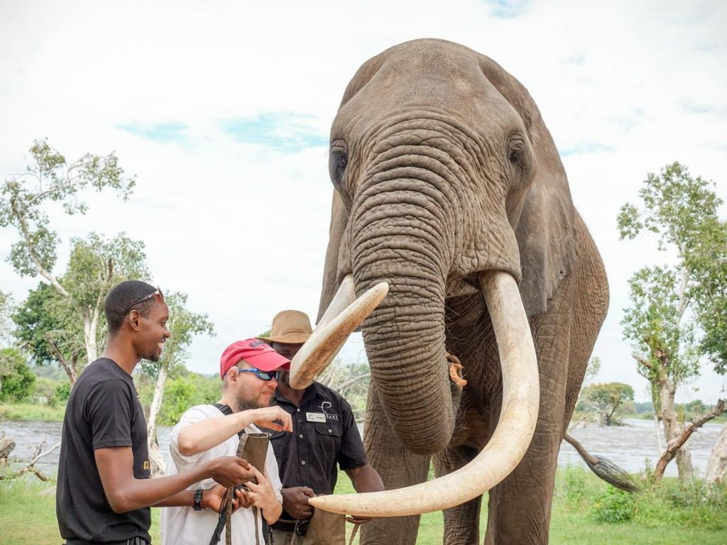 Closer shot of Tony, with Ethan and the keeper, feeding the elephant.