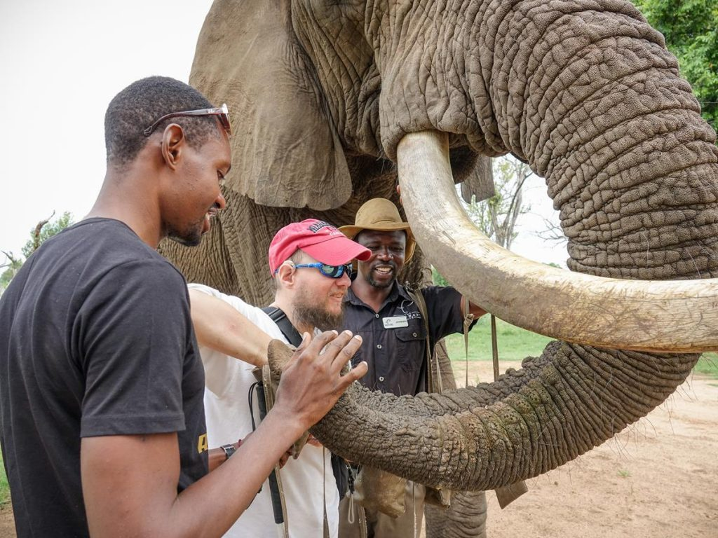 Right up close looking at Tony putting food into the elephant's trunk.