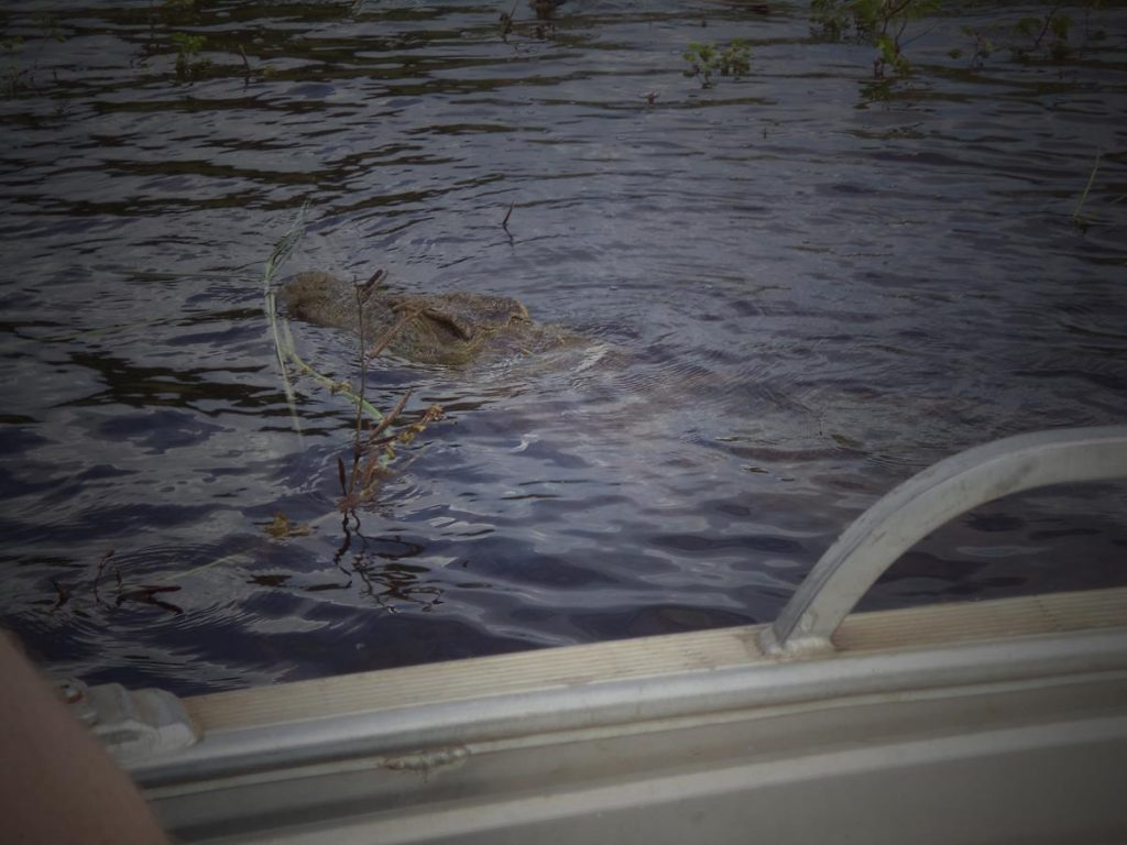 The partly submerged head of a crocodile appearing close to the boat.