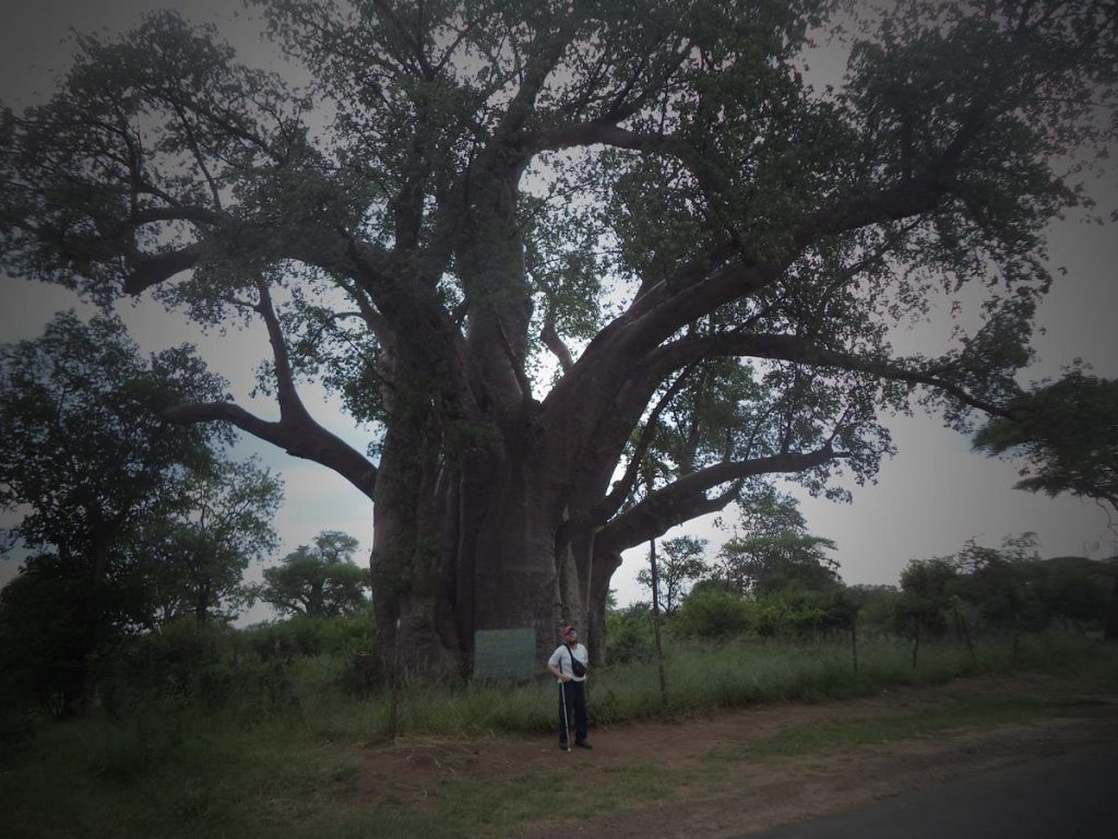 Tony in front of a very large baobab tree. A sign in front of the tree gives its girth as a massive 18 metres and its height as 23 metres. Located near   Victoria Falls Town, Zimbabwe, close to the bridge crossing the border with Zambia.