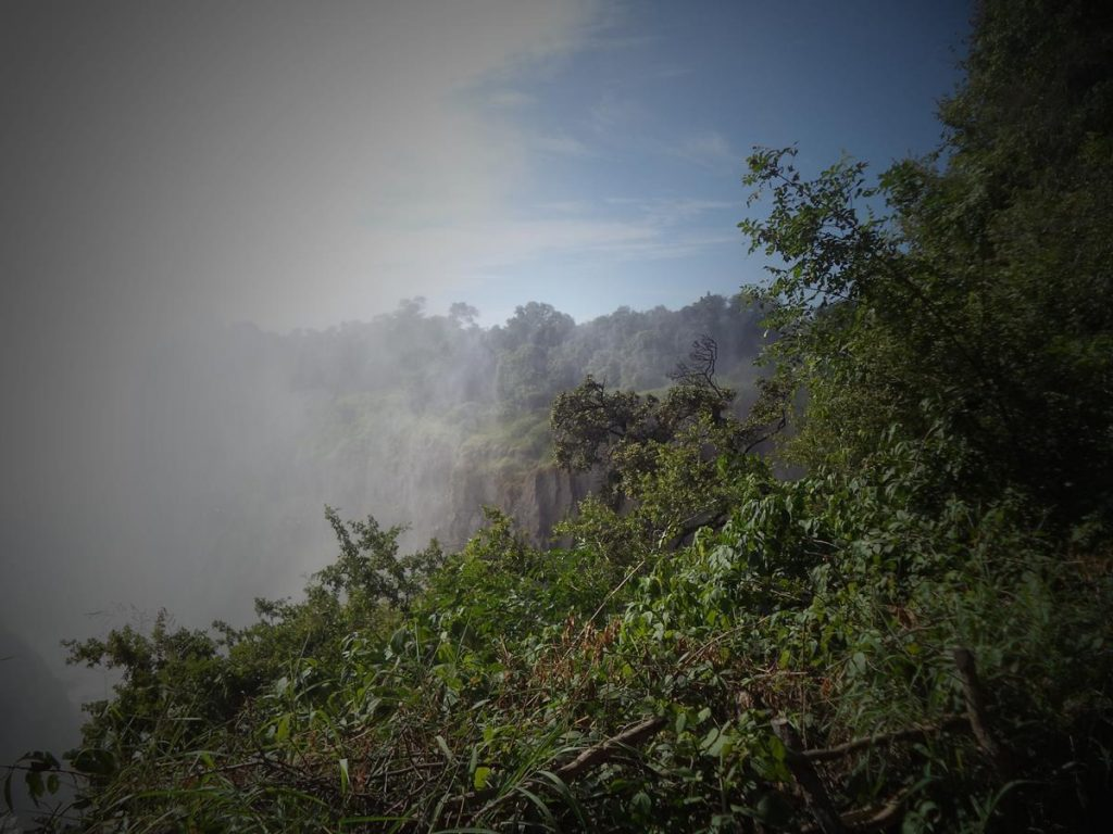 Misty view of vegetation at the far western end of the gorge into  which Victoria Falls descends. The top edge of the gorge, with a near  vertical rocky cliff, is visible opposite.  Probably taken above viewpoint 2.
